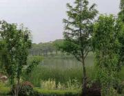 跑遍上海之滴翠园公园,闵行外环边新打造开放公园,在一片绿色中慢跑,免费停车